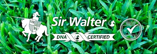 DNA Certified Sir Walter Turf Perth