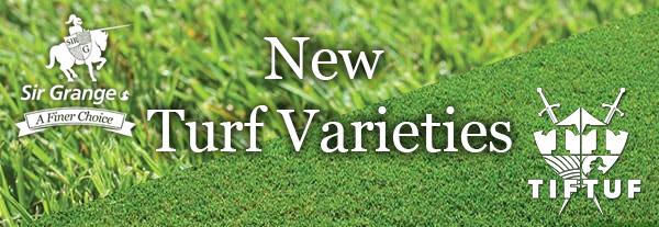 Sir Walter Lawn | Lawn Doctor Turf Shop | Perth Wangara