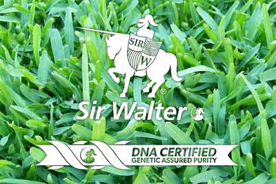 sir walter turf perth - sir walter lawn perth