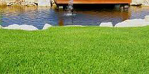 kikuyu-lawn-1-260x150