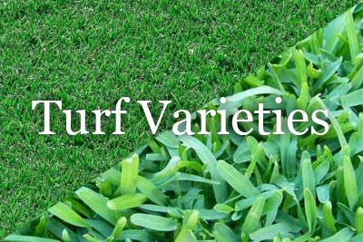 perth turf varieties available online - sir walter turf perth - sir walter lawn perth